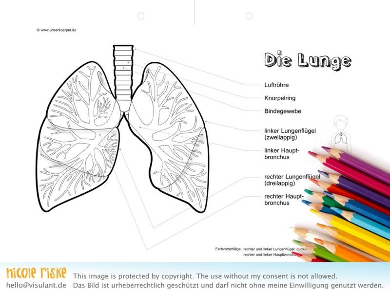 Aumalbild Lunge