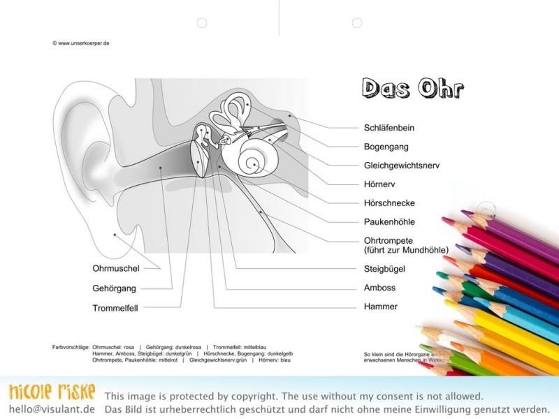 Das Ohr zum Ausmalen