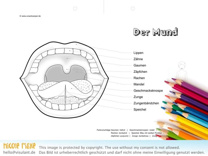 Der Mund als Ausmalbild